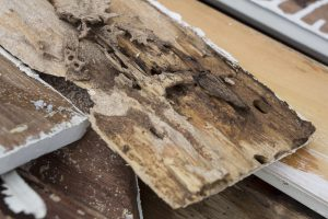 Is Preventative Termite Treatment Necessary?