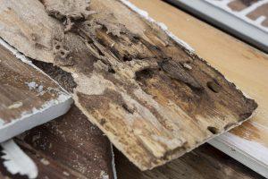 Is Preventative Termite Treatment Necessary?