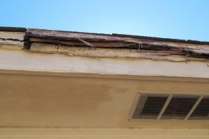 Why Pest Inspections Are Essential for Termite Control?