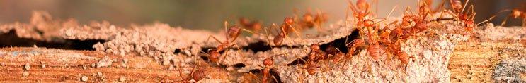 termites control brisbane